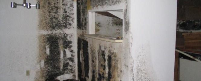 Mold Damage Prevention Black Mold Prevention Orange County