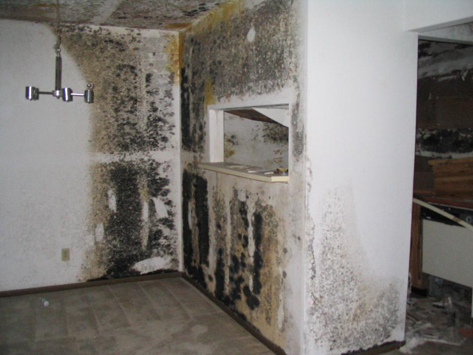 Safe Black Mold Removal In Orange County Ca Gregory